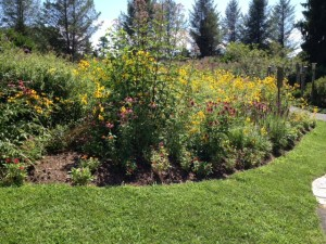 August Perennials at Elm Bank